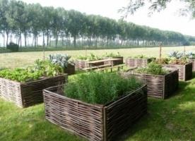 Tuinstijl De Ecotuin: Hoe creëer ik een duurzame en ecologische tuin?