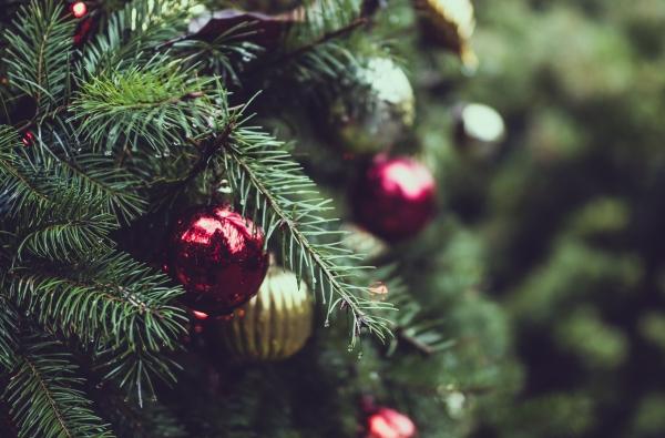 Welke kerstboom haal je het best in huis?